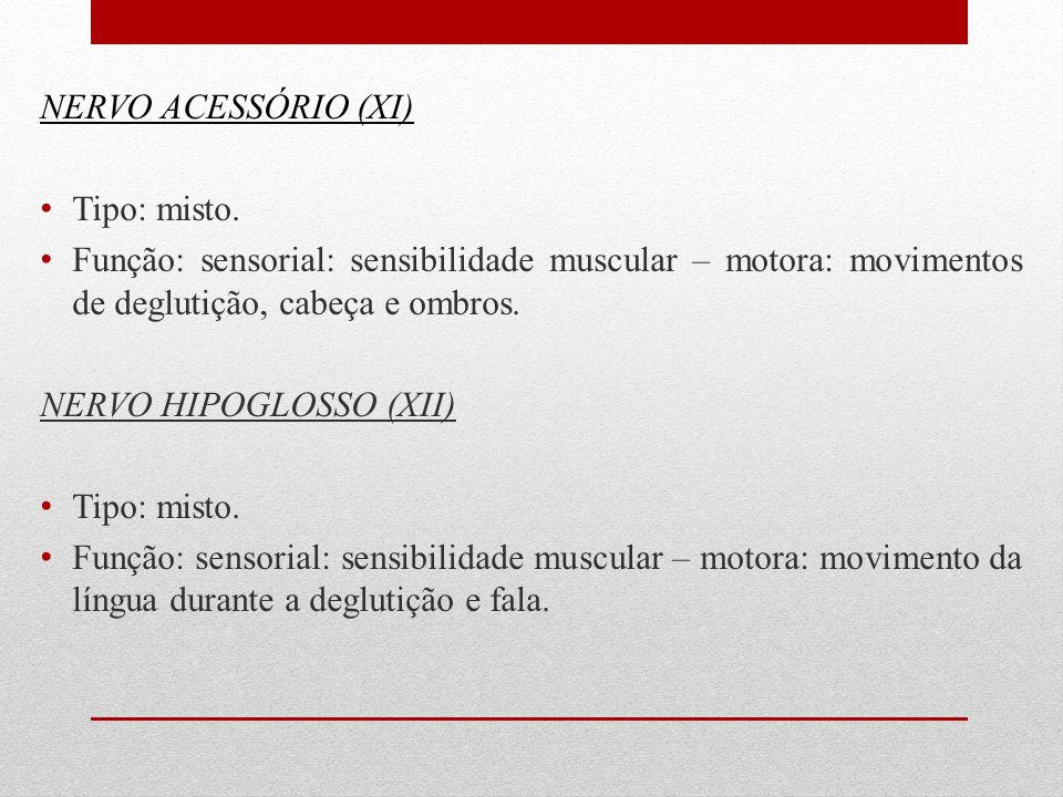 NERVO ACESSÓRIO (XI) Tipo: misto. Função: sensorial: sensibilidade muscular – motora: movimentos de deglutição, cabeça e ombros. NERVO HIPOGLOSSO (XII