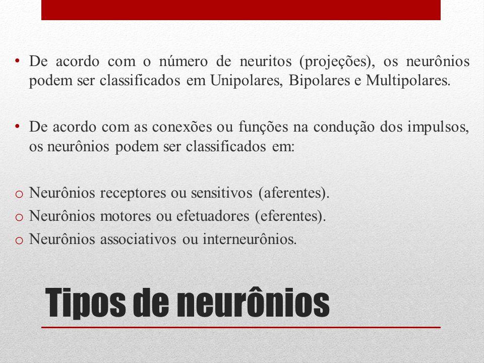 Tipos de neurônios De acordo com o número de neuritos (projeções), os neurônios podem ser classificados em Unipolares, Bipolares e Multipolares. De ac