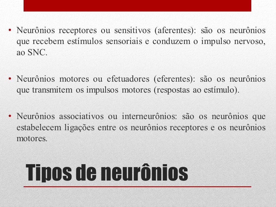 Tipos de neurônios Neurônios receptores ou sensitivos (aferentes): são os neurônios que recebem estímulos sensoriais e conduzem o impulso nervoso, ao