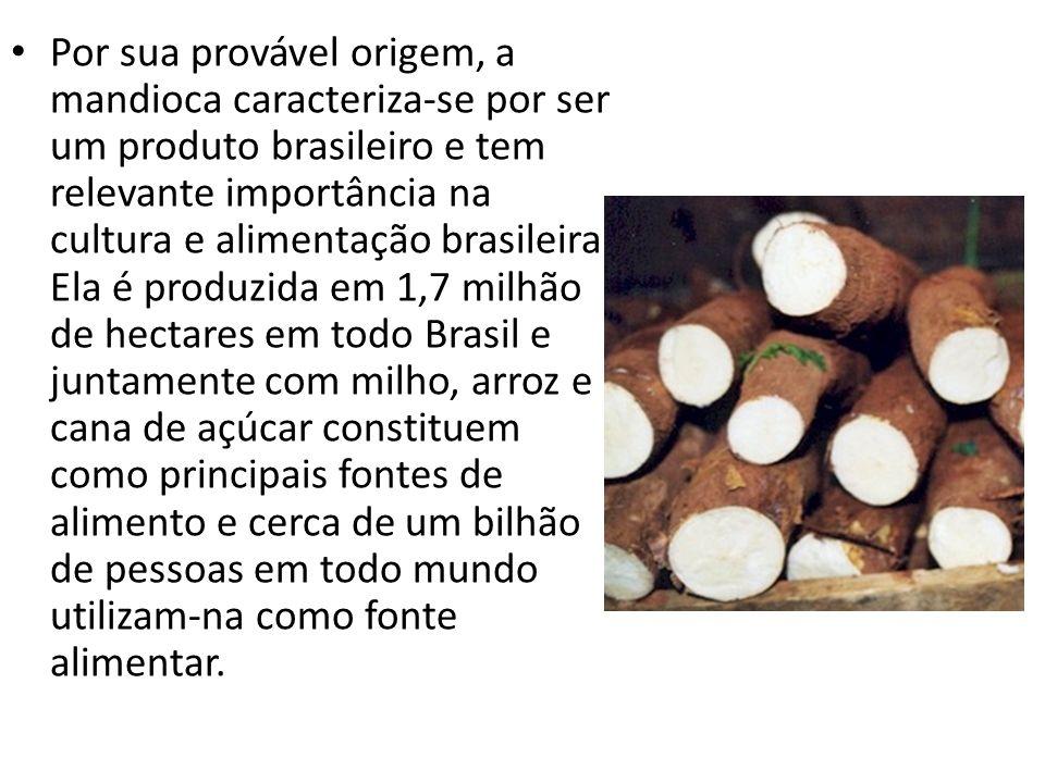 A mandioca é uma raiz com alto valor energético (cada 100 gramas possui 150 calorias) Possui sais minerais (cálcio, ferro e fósforo) e vitaminas do Complexo B.