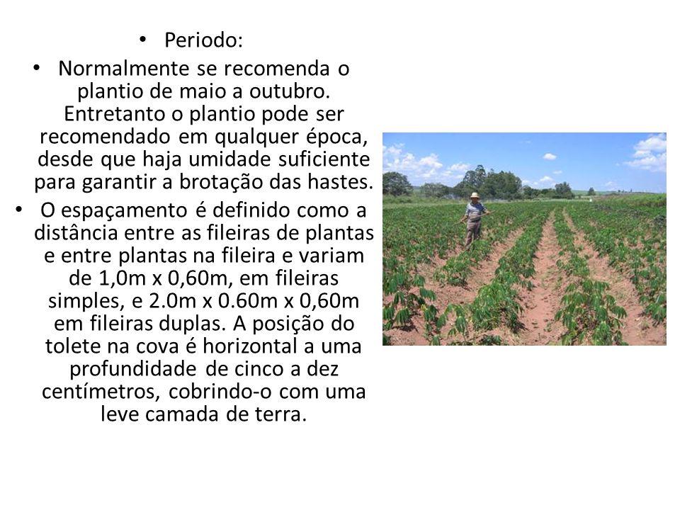 Clima: É cultivada em regiões de clima tropical e subtropical, com precipitação pluviométrica variável de 600 a 1.200 mm de chuvas bem distribuídas e uma temperatura média de em torno de 25ºC.