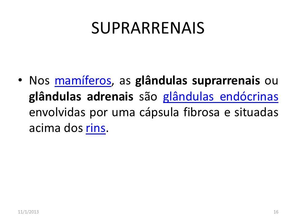 SUPRARRENAIS Nos mamíferos, as glândulas suprarrenais ou glândulas adrenais são glândulas endócrinas envolvidas por uma cápsula fibrosa e situadas aci