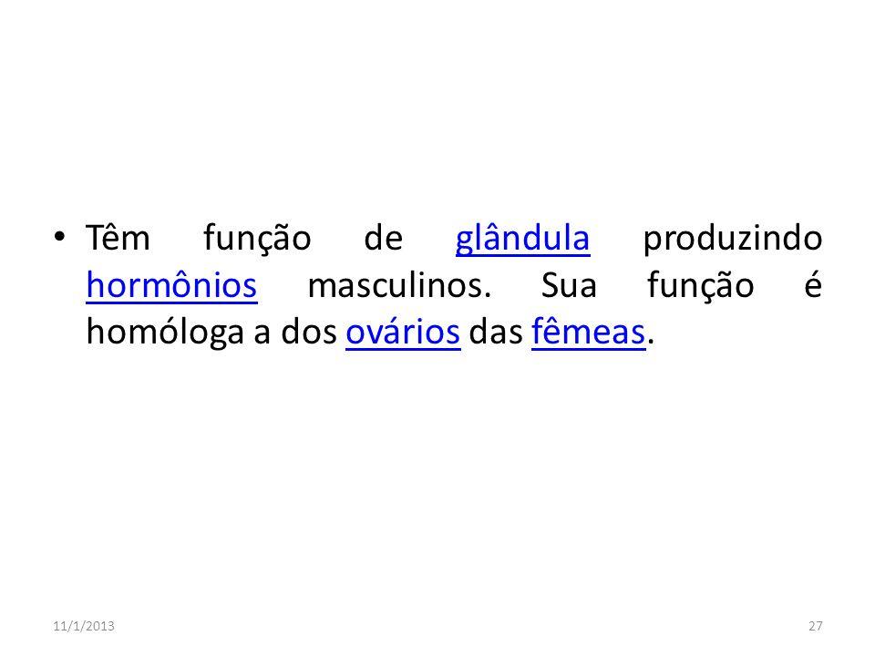 Têm função de glândula produzindo hormônios masculinos. Sua função é homóloga a dos ovários das fêmeas.glândula hormôniosováriosfêmeas 11/1/201327