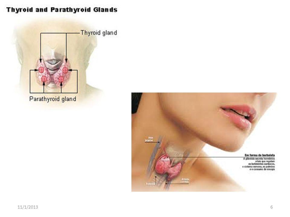 Têm função de glândula produzindo hormônios masculinos.