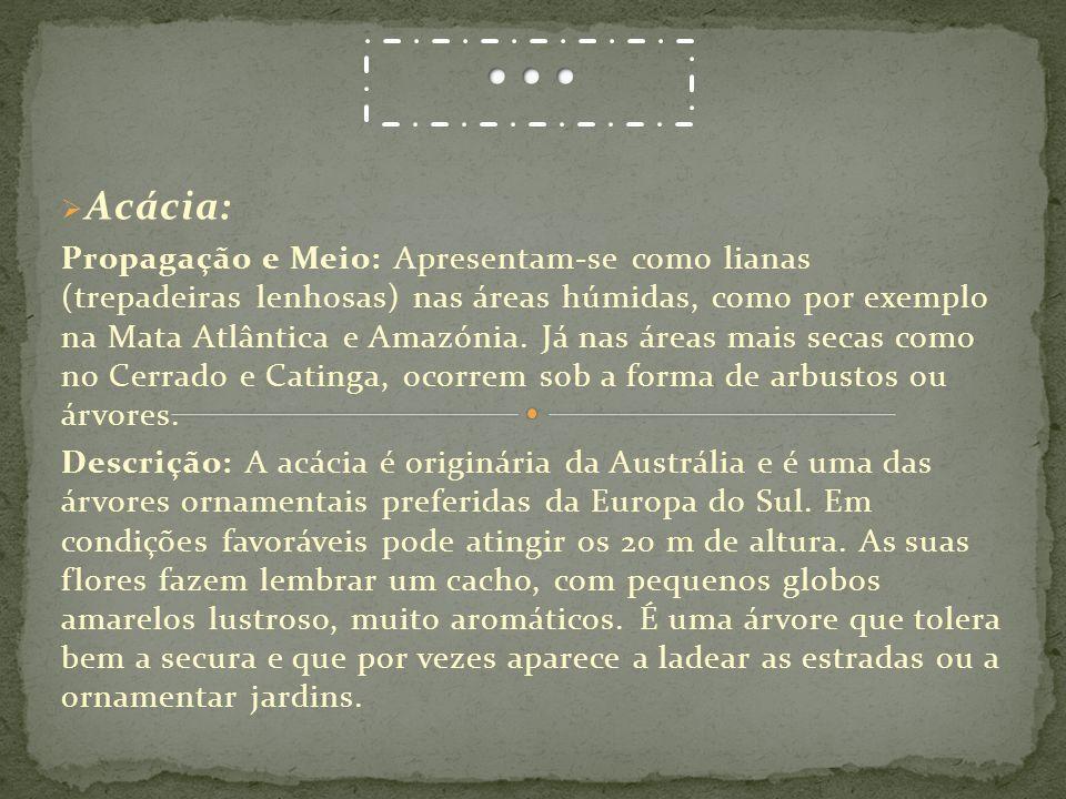 Acácia: Propagação e Meio: Apresentam-se como lianas (trepadeiras lenhosas) nas áreas húmidas, como por exemplo na Mata Atlântica e Amazónia. Já nas á