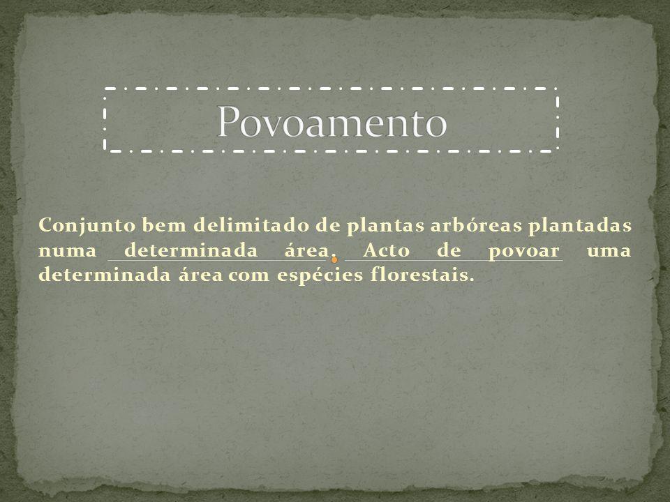 Conjunto bem delimitado de plantas arbóreas plantadas numa determinada área. Acto de povoar uma determinada área com espécies florestais.