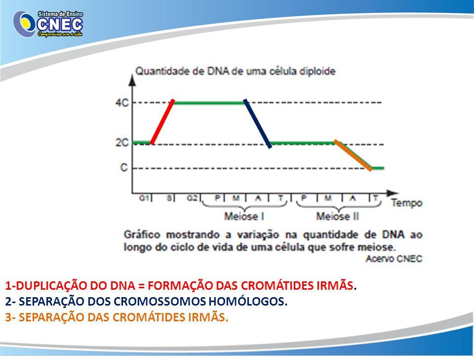 1-DUPLICAÇÃO DO DNA = FORMAÇÃO DAS CROMÁTIDES IRMÃS. 2- SEPARAÇÃO DOS CROMOSSOMOS HOMÓLOGOS. 3- SEPARAÇÃO DAS CROMÁTIDES IRMÃS.