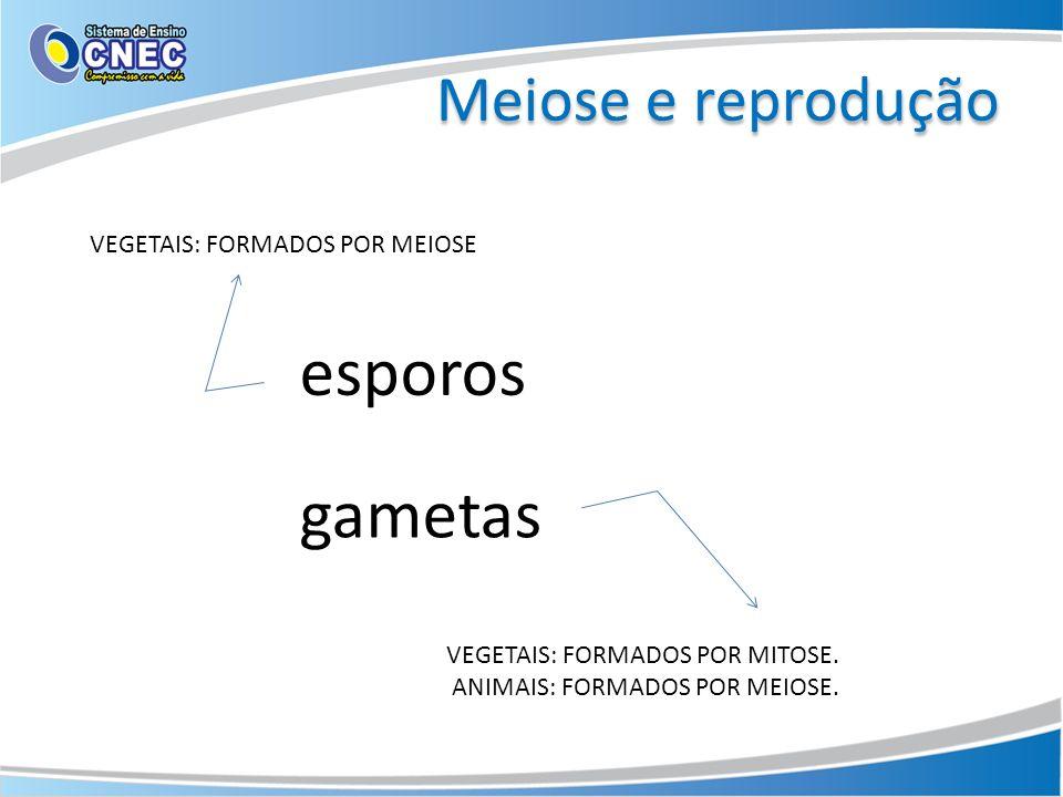 Meiose e reprodução VEGETAIS: FORMADOS POR MEIOSE VEGETAIS: FORMADOS POR MITOSE. ANIMAIS: FORMADOS POR MEIOSE. esporos gametas