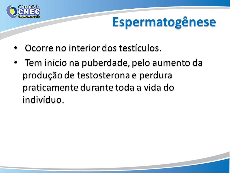 Espermatogênese Ocorre no interior dos testículos. Tem início na puberdade, pelo aumento da produção de testosterona e perdura praticamente durante to