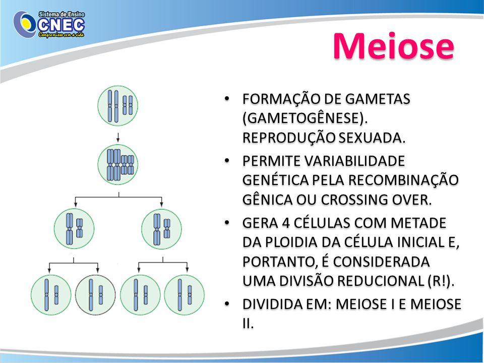 FORMAÇÃO DE GAMETAS (GAMETOGÊNESE). REPRODUÇÃO SEXUADA. PERMITE VARIABILIDADE GENÉTICA PELA RECOMBINAÇÃO GÊNICA OU CROSSING OVER. GERA 4 CÉLULAS COM M
