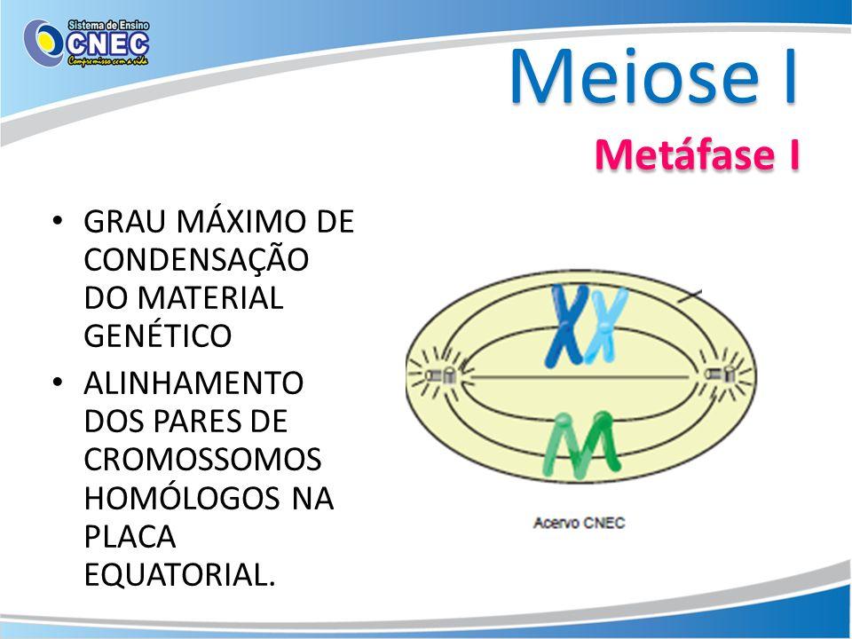 Meiose I Metáfase I GRAU MÁXIMO DE CONDENSAÇÃO DO MATERIAL GENÉTICO ALINHAMENTO DOS PARES DE CROMOSSOMOS HOMÓLOGOS NA PLACA EQUATORIAL.