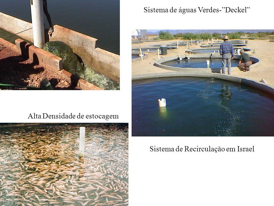 Alta Densidade de estocagem Sistema de Recirculação em Israel Sistema de águas Verdes-Deckel