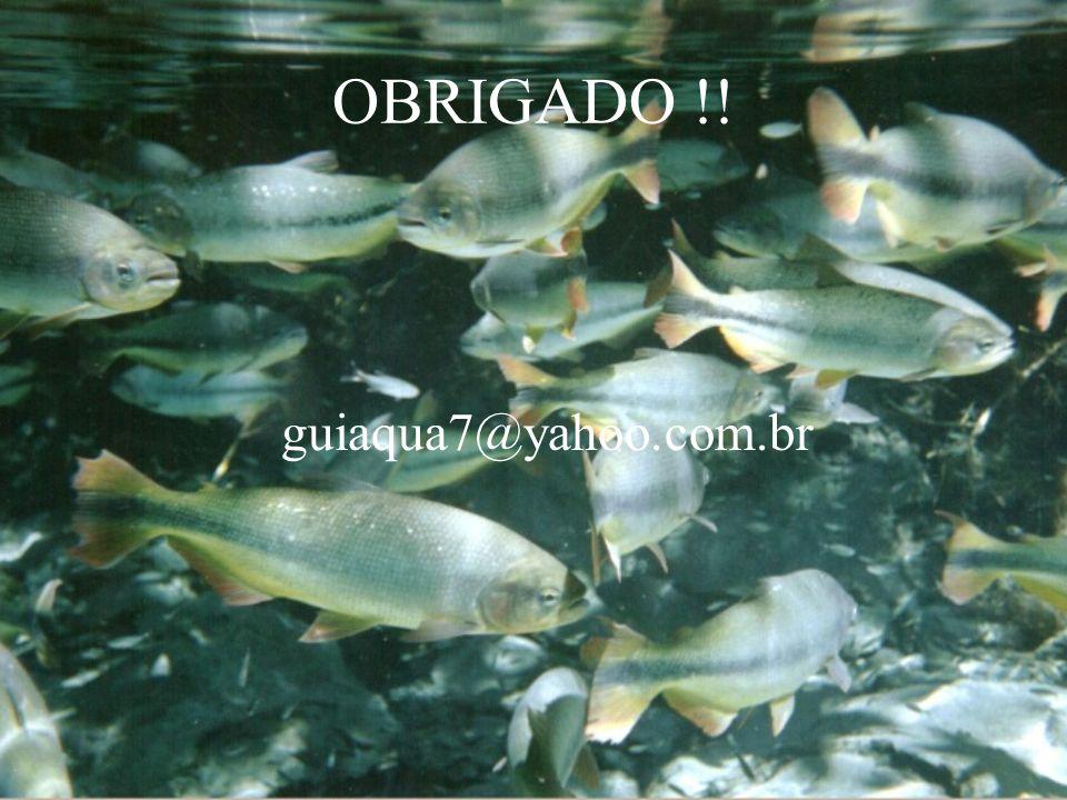 OBRIGADO !! guiaqua7@yahoo.com.br