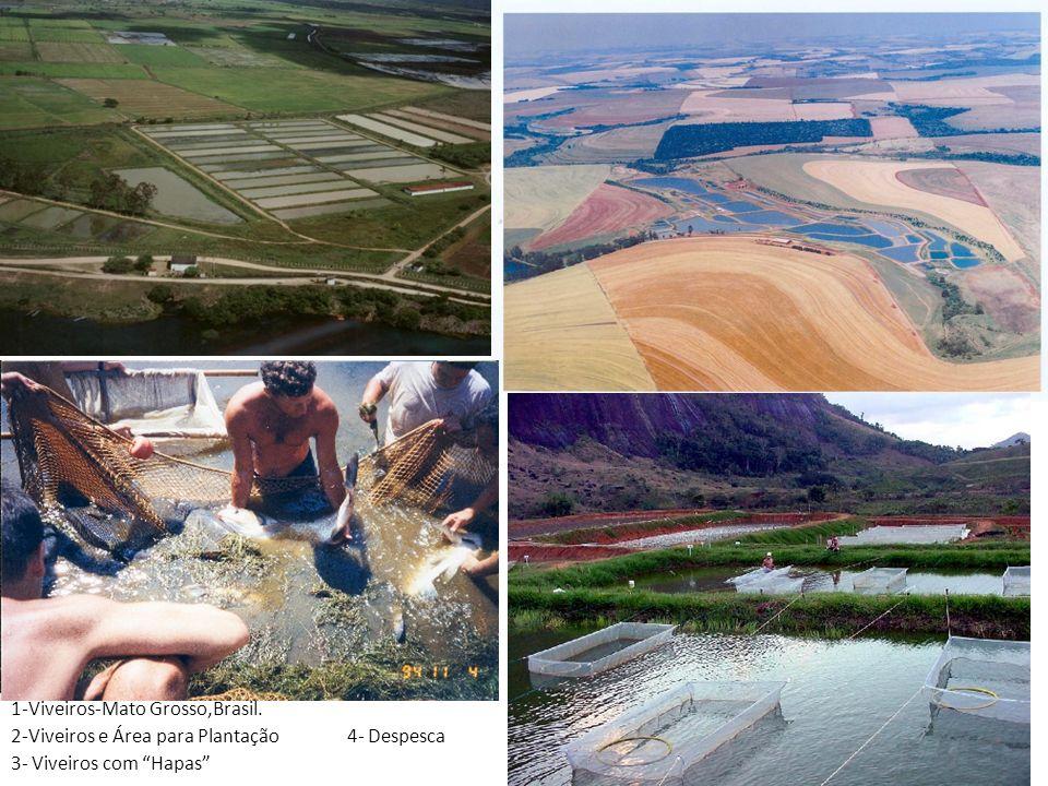 1-Viveiros-Mato Grosso,Brasil. 2-Viveiros e Área para Plantação 4- Despesca 3- Viveiros com Hapas