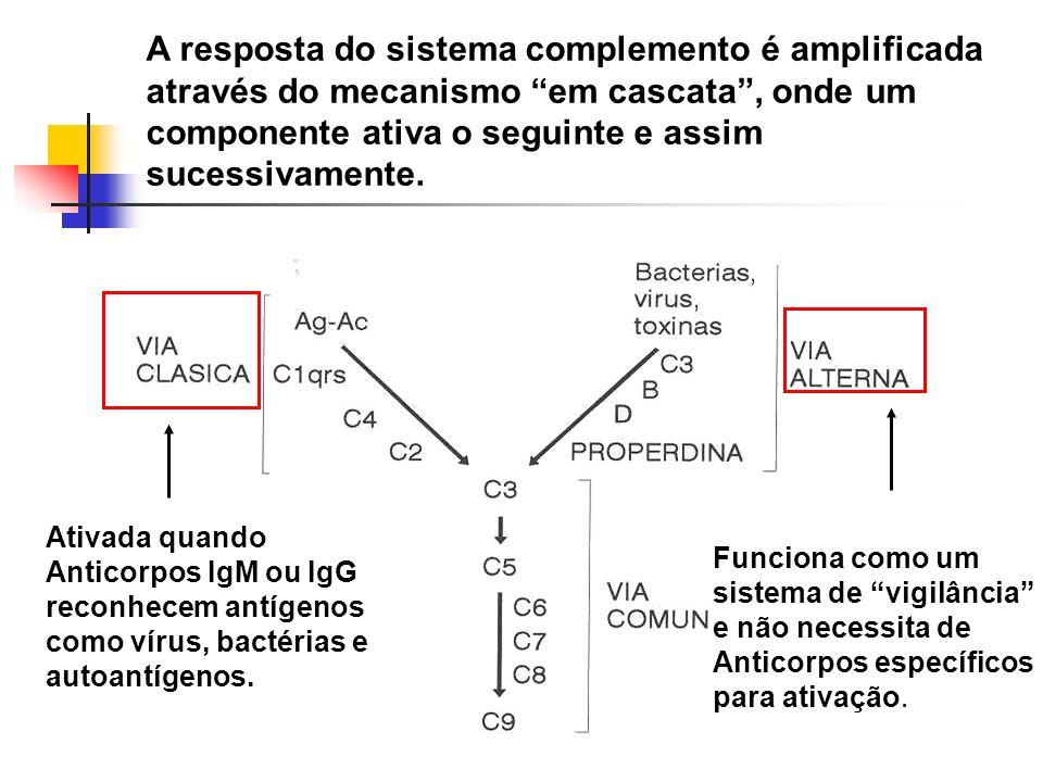 A resposta do sistema complemento é amplificada através do mecanismo em cascata, onde um componente ativa o seguinte e assim sucessivamente. Ativada q