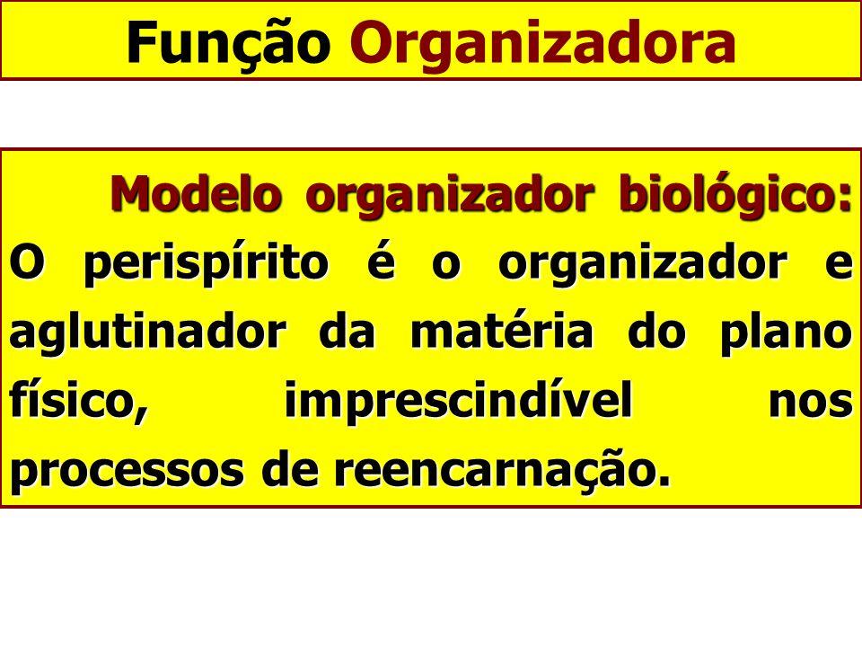 Função Organizadora Modelo organizador biológico: O perispírito é o organizador e aglutinador da matéria do plano físico, imprescindível nos processos