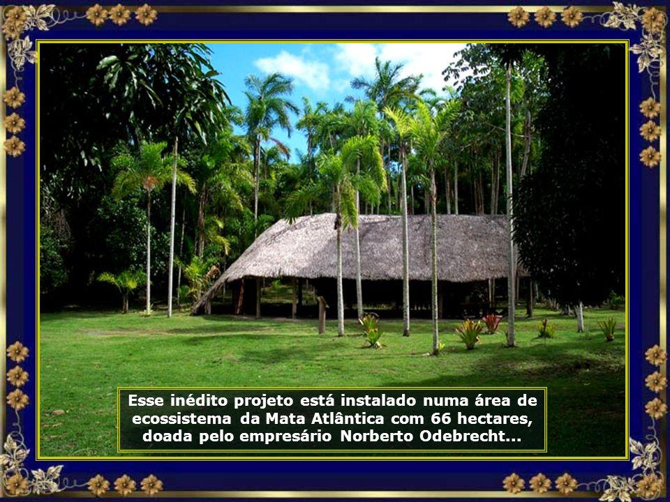 Eco Parque Costa do Sauípe, uma antiga fazenda de produção de palmitos, hoje se constitui num projeto de preservação ambiental...