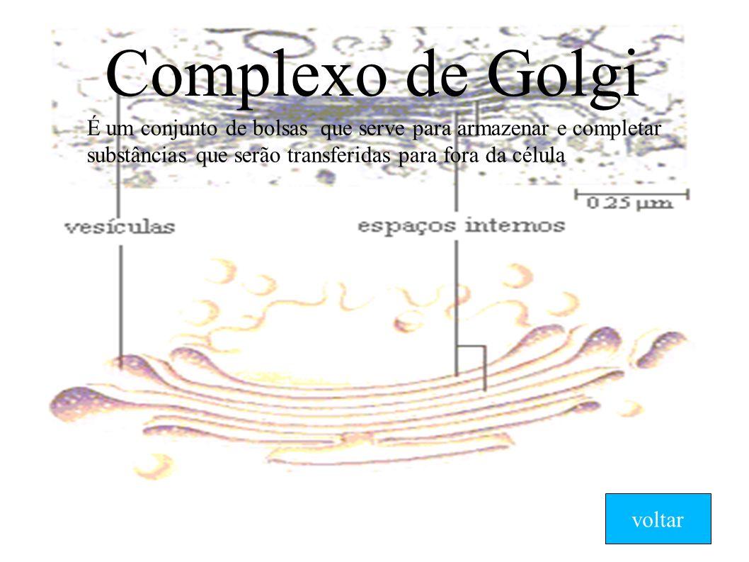 Complexo de Golgi É um conjunto de bolsas que serve para armazenar e completar substâncias que serão transferidas para fora da célula voltar