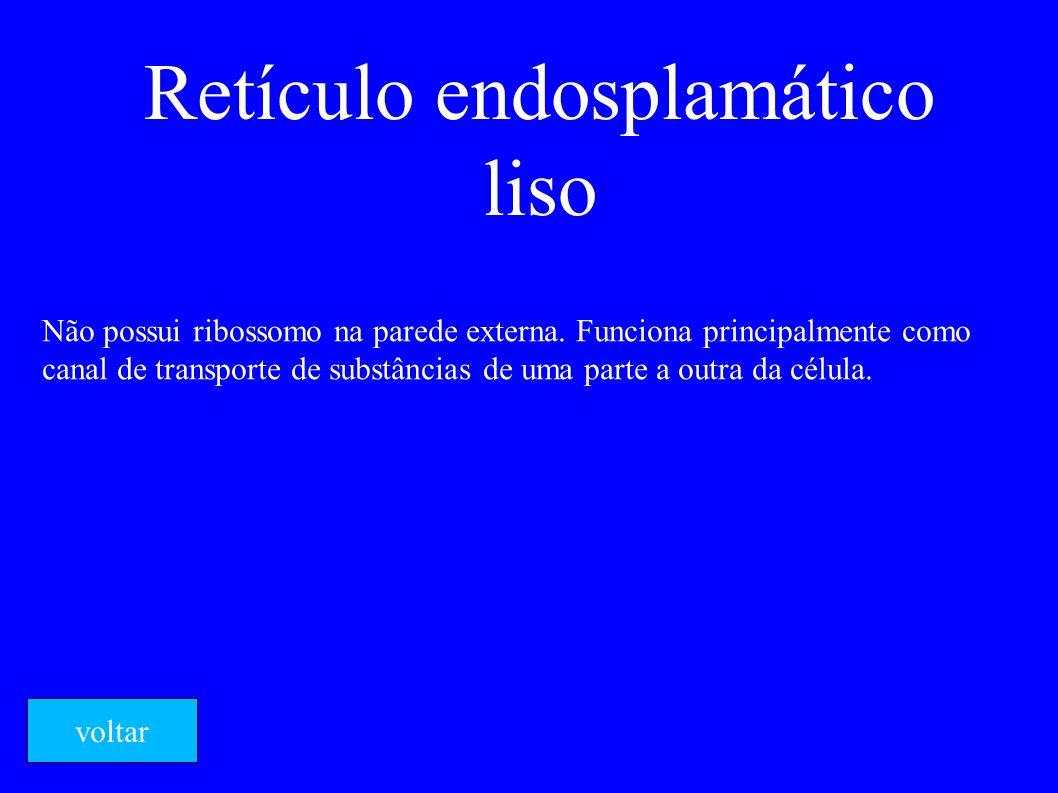 Retículo endosplamático liso Não possui ribossomo na parede externa. Funciona principalmente como canal de transporte de substâncias de uma parte a ou