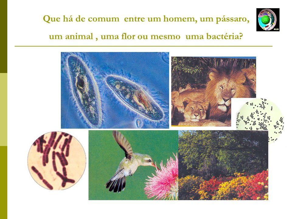 Que há de comum entre um homem, um pássaro, um animal, uma flor ou mesmo uma bactéria?