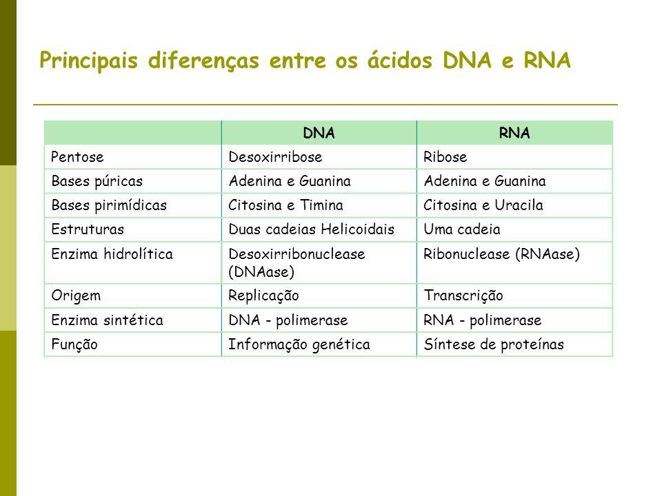 Principais diferenças entre os ácidos DNA e RNA DNARNA PentoseDesoxirriboseRibose Bases púricasAdenina e Guanina Bases pirimídicasCitosina e TiminaCit