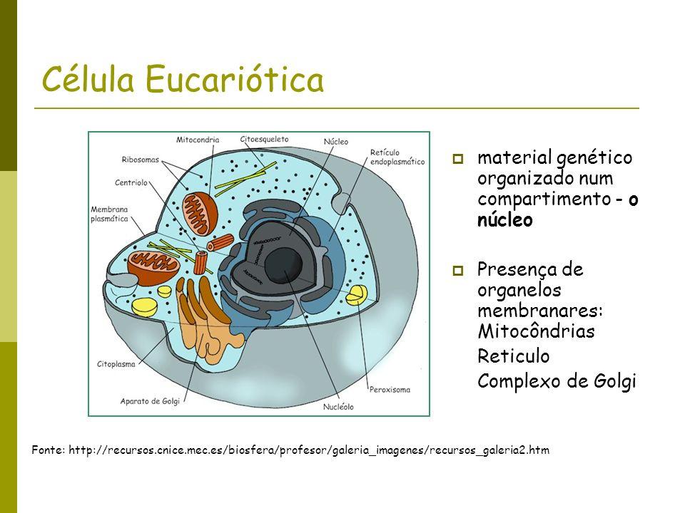 Célula Eucariótica material genético organizado num compartimento - o núcleo Presença de organelos membranares: Mitocôndrias Reticulo Complexo de Golg