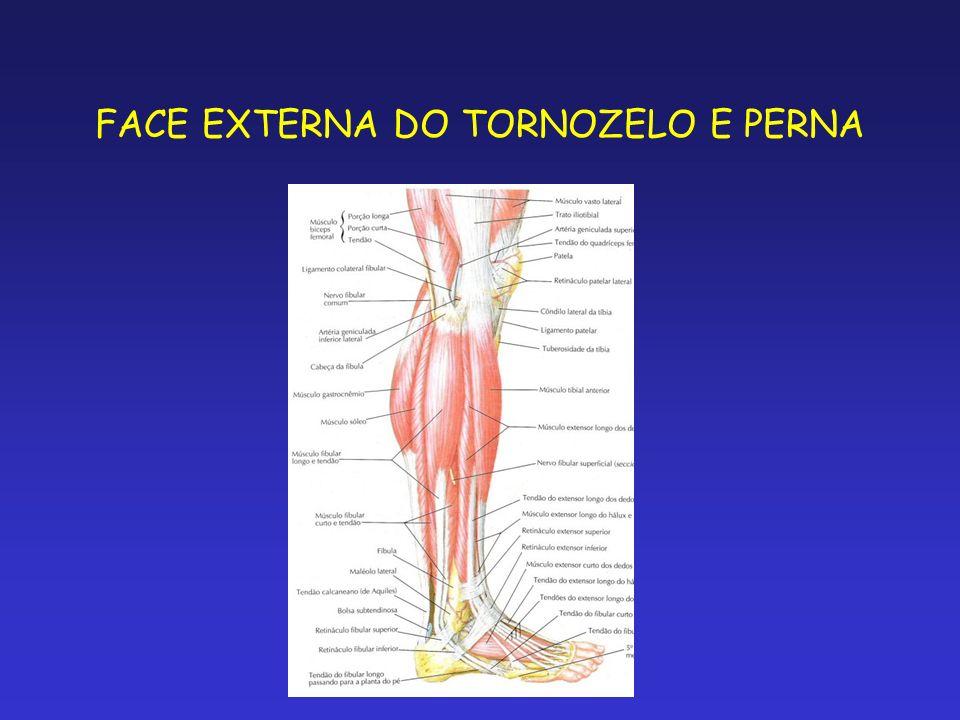 BAINHAS TENDINOSA DA FACE EXTERNA DO TORNOZELO