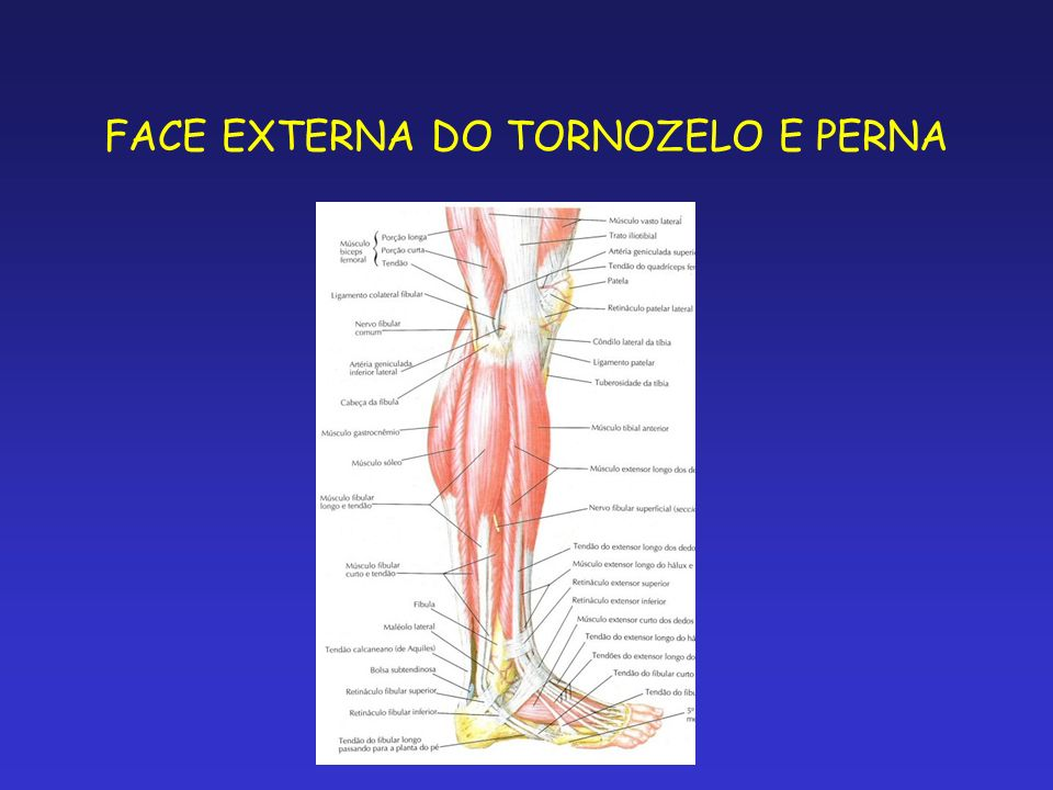 FACE EXTERNA DO TORNOZELO E PERNA
