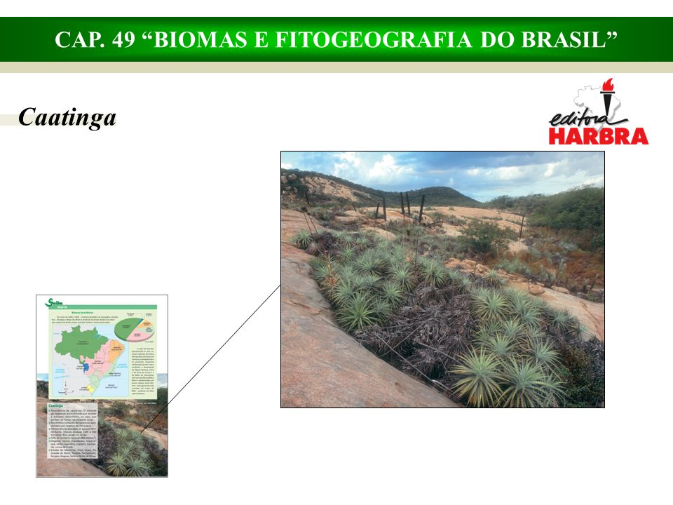 CAP. 49 BIOMAS E FITOGEOGRAFIA DO BRASIL Caatinga
