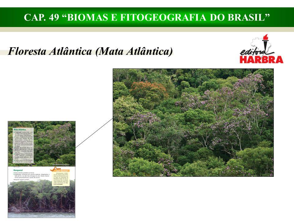 CAP. 49 BIOMAS E FITOGEOGRAFIA DO BRASIL Floresta Atlântica (Mata Atlântica)