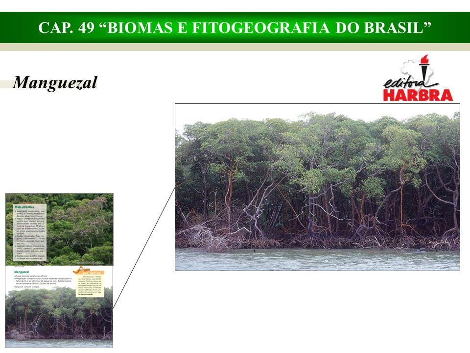 CAP. 49 BIOMAS E FITOGEOGRAFIA DO BRASIL Pampas