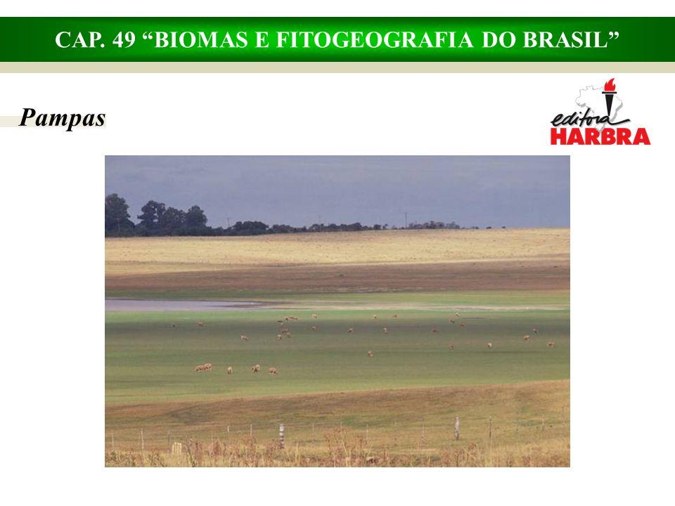 CAP. 49 BIOMAS E FITOGEOGRAFIA DO BRASIL Mata de Araucárias