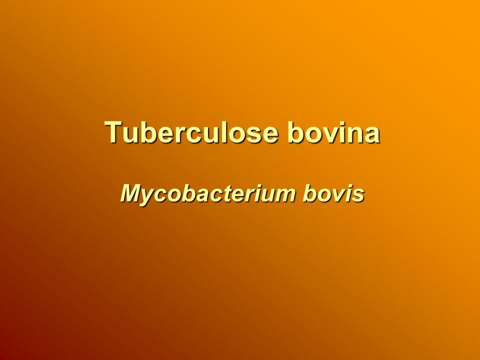 Introdução da Tuberculose no Rebanho Aquisição de animais; Participação em eventos; Animais silvestres; Homem; Animais domésticos; Proximidade de outro rebanho positivo.