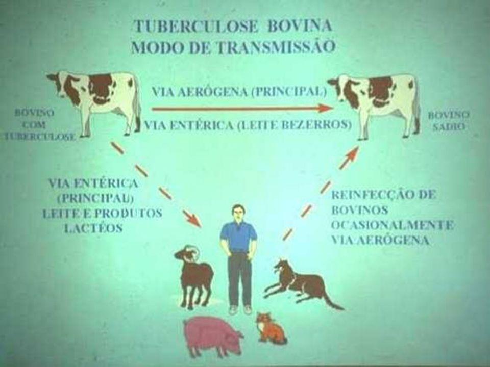 Sinais Animais infectados: –Assintomáticos.