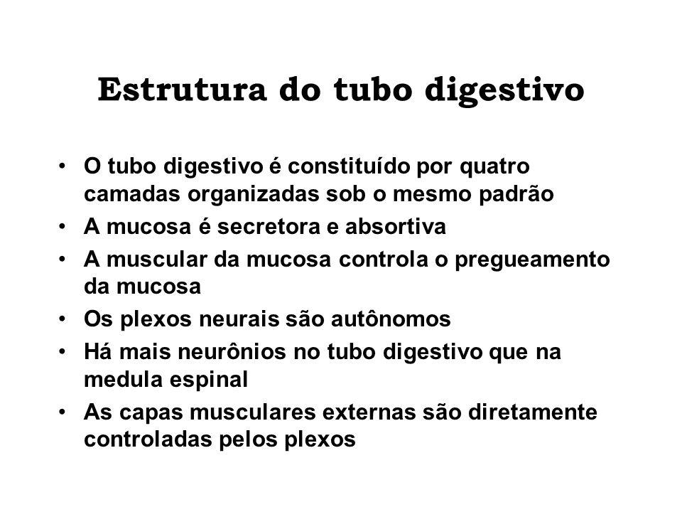 Estrutura do tubo digestivo O tubo digestivo é constituído por quatro camadas organizadas sob o mesmo padrão A mucosa é secretora e absortiva A muscul