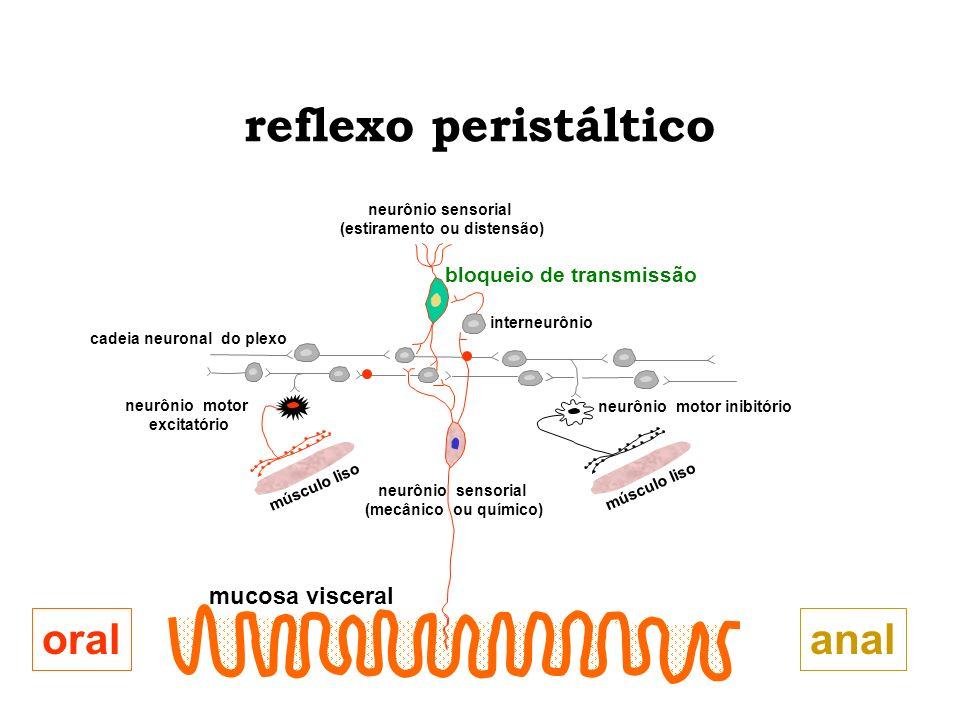 reflexo peristáltico analoral mucosa visceral neurônio motor excitatório neurônio motor inibitório cadeia neuronal do plexo neurônio sensorial (estira