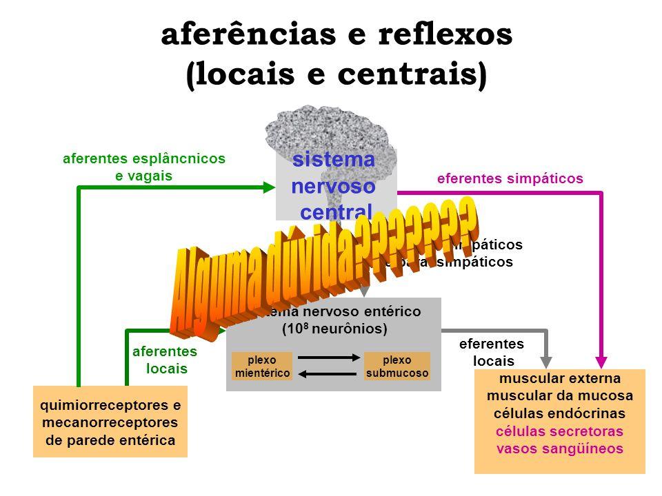 aferências e reflexos (locais e centrais) quimiorreceptores e mecanorreceptores de parede entérica muscular externa muscular da mucosa células endócri