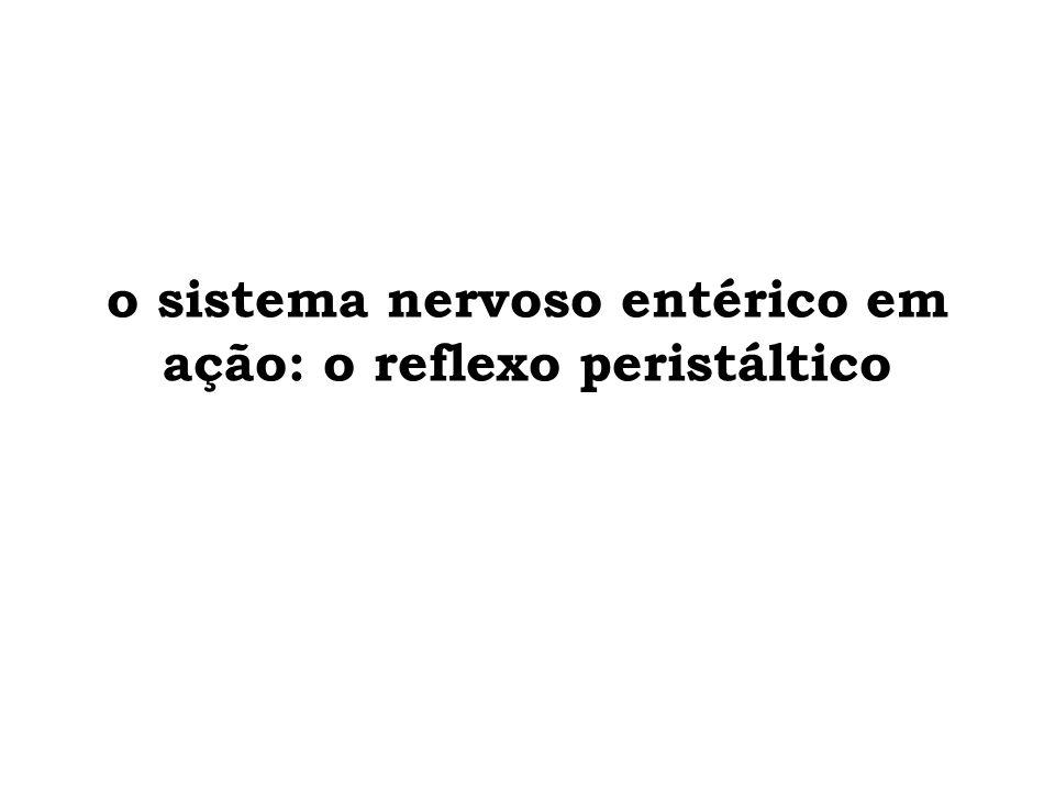 reflexo peristáltico analoral mucosa visceral neurônio sensorial aferências da muscular lisa (estiramento ou distensão) neurônio sensorial aferências da mucosa (mecânico ou químico) interneurônio via sensorial parede intestinal luz intestinal