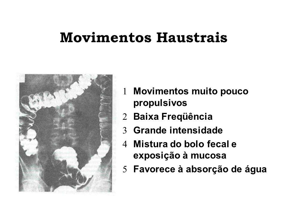 Movimentos Haustrais Movimentos muito pouco propulsivos Baixa Freqüência Grande intensidade Mistura do bolo fecal e exposição à mucosa Favorece à abso