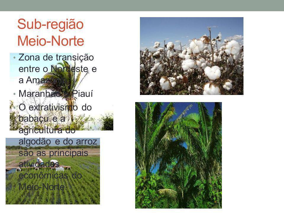 Sub-região Meio-Norte Zona de transição entre o Nordeste e a Amazônia Maranhão e Piauí O extrativismo do babaçu e a agricultura do algodão e do arroz são as principais atividades econômicas do Meio-Norte.