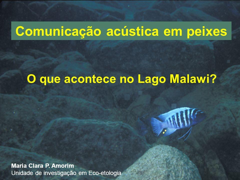 Comunicação acústica em peixes O que acontece no Lago Malawi.