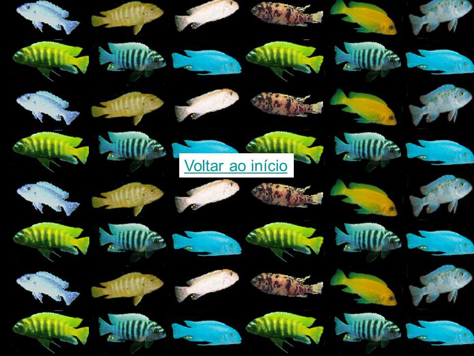 Diferenças nos sinais acústicos podem ter contribuído para a divergência das espécies no Lago Malawi