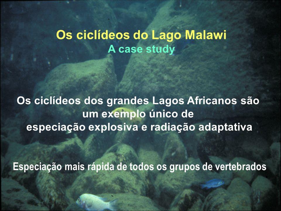 Os ciclídeos dos grandes Lagos Africanos são um exemplo único de especiação explosiva e radiação adaptativa Especiação mais rápida de todos os grupos de vertebrados Os ciclídeos do Lago Malawi A case study