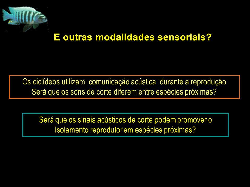 E outras modalidades sensoriais.