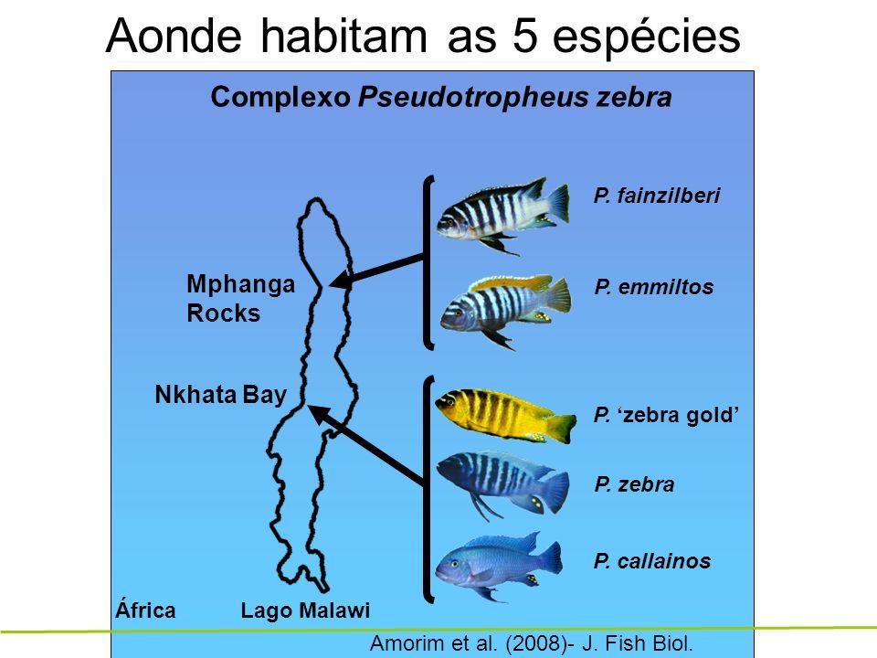 Ciclídeos Pseudotropheus sp. Estudamos as diferenças inter-especificas nos sons de corte em 5 espécies irmãs Isolamento reprodutor?