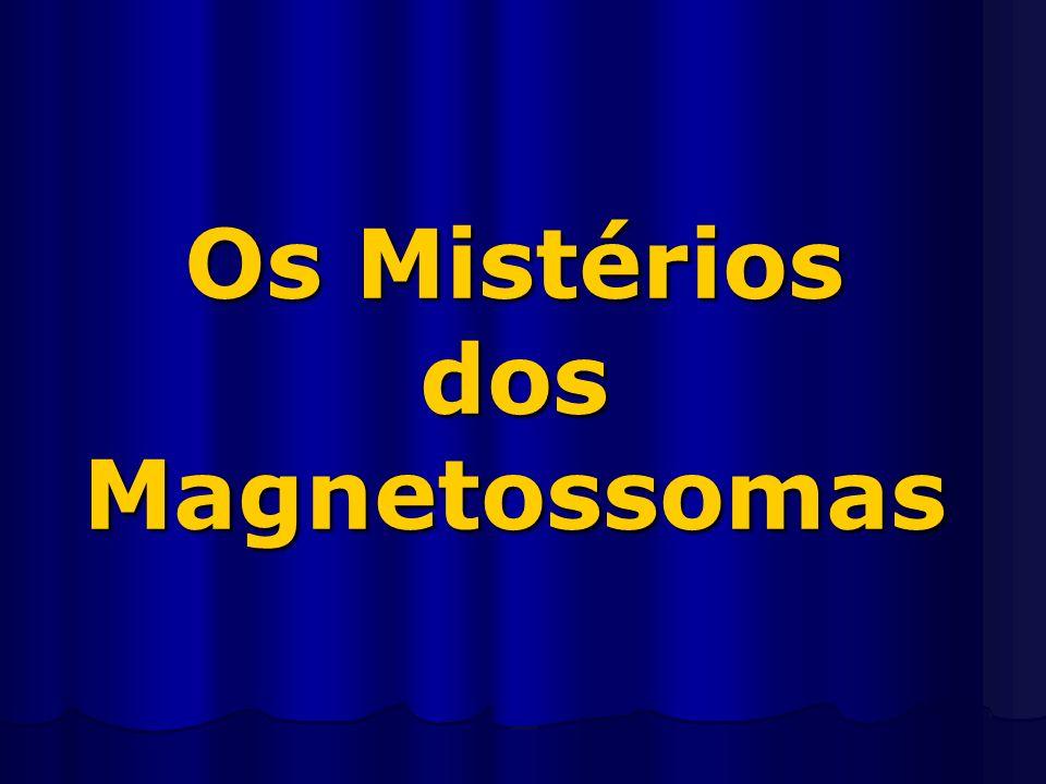 Os Mistérios dos Magnetossomas