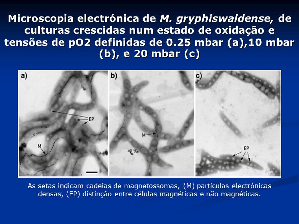 Aerotáxis: Existem em bactérias aerófilas (só sobrevivem sob baixas concentrações de oxigénio); Procuram concentrações óptimas de oxigénio, formando b