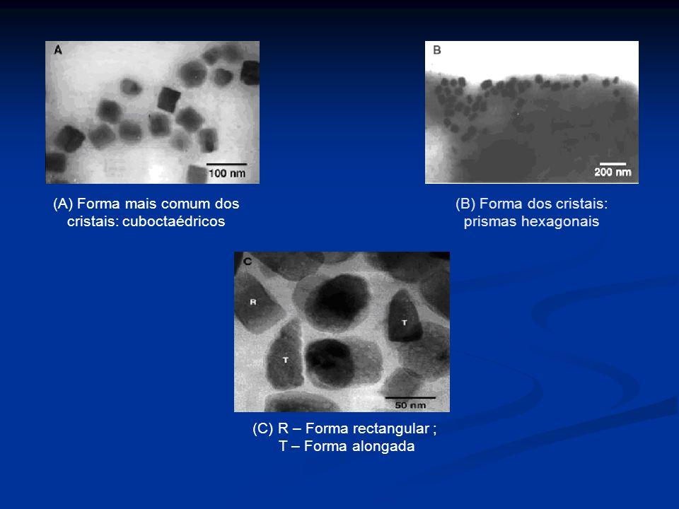 Diâmetro dos magnetossomas entre 40-100 nm; Organização em: Cadeias lineares Aglomerados Morfologia apresentada: Cocos Vibriões Bastonetes Espírilos 1