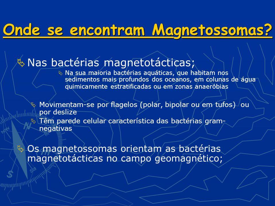 Onde se encontram Magnetossomas.