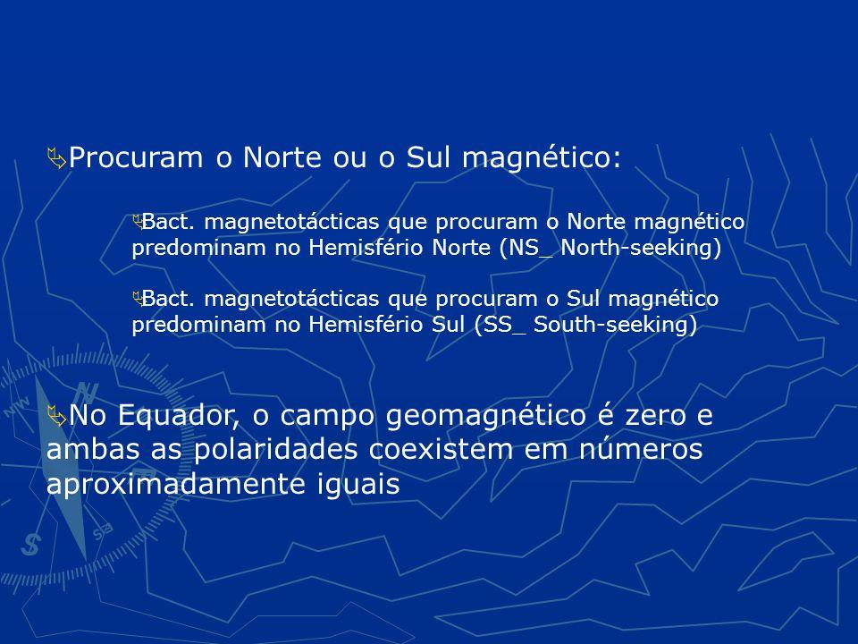 Procuram o Norte ou o Sul magnético: Bact.